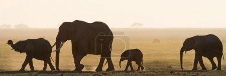 Mother elephant with cub in sunset rays