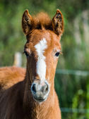 Close up portrait of baby horse