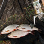 Постер, плакат: Catching freshwater fish and fishing rods with fishing reel