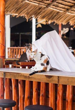 Photo pour Chaton et chat noir et blanc effrayé ou étonné - image libre de droit