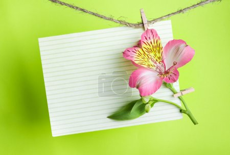 Photo for Pink Alstroemeria and a greeting card on a rope with clothespins against a bright green  background, greeting and love concept, happy birthday, Congratulations on March 8 - Royalty Free Image