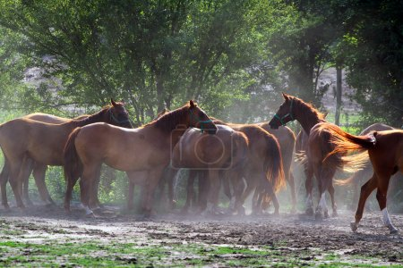 Group of horses drinking from a water trough at rural ranch
