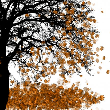 Photo for Maple tree - Royalty Free Image
