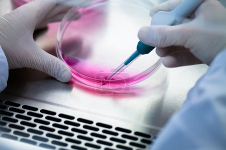 Laboratory work with tissue cultures