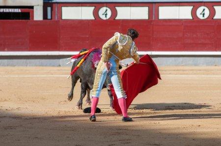 Bullfight, matador prepare deadly attack
