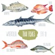 Thai fishes. Vector watercolor illustration....