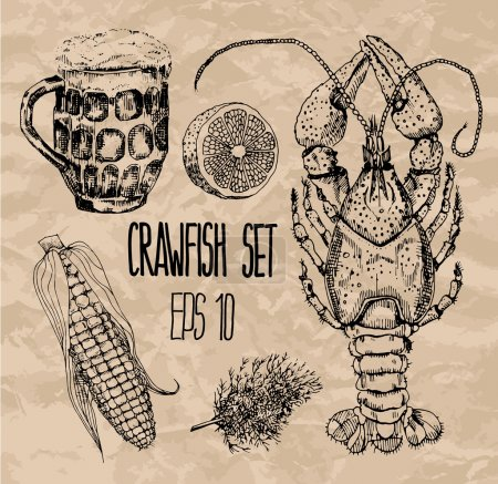 Crawfish set. Vector illustration.