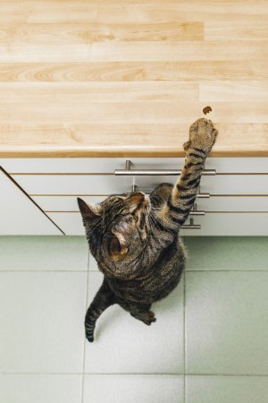 eating cat food in the kitchen