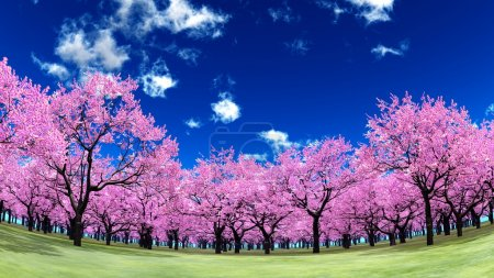 Photo for Image of cherry trees - Royalty Free Image