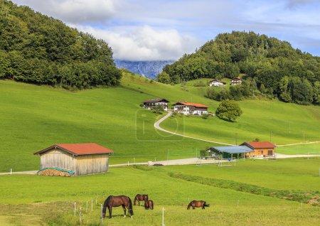 Photo pour Pastorale. Vie paisible et sereine du hameau autrichien, cheval de pâturage sur les prairies verdoyantes, maisons de charmants, soignées, enroulement des chemins, des forêts et des montagnes. - image libre de droit
