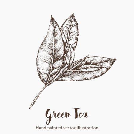Green tea leaf vector illustration. Floral branch ...