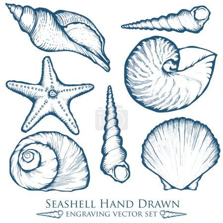 Seashell, sea shell, starfish nature ocean aquatic underwater vector set. Hand drawn marine engraving illustration on white background