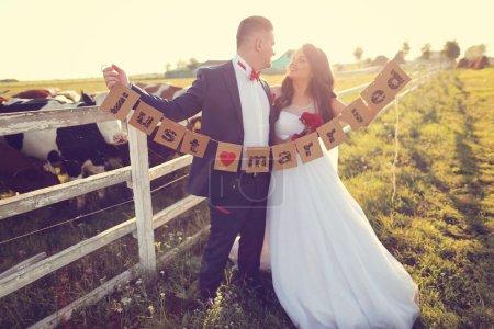 Photo pour Marié tenant juste des cartes mariées, près de la ferme de vache - image libre de droit