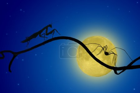 the silhouettes of the praying mantis and the spider on slender twig on the backdrop of the moon. spider runs away, mantis catching up