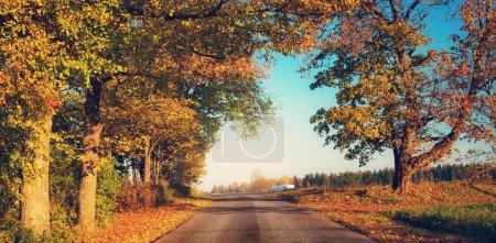 alley in autumn