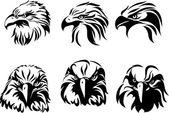 Eagle the head of an eagle