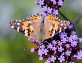 Motýl a květiny