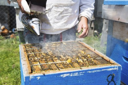 beekeeper fogging bees away from hive