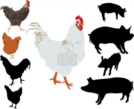 Rooster chicken pigs vector silhouette