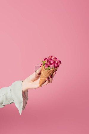 Photo pour Vue partielle de la femme tenant un cône de gaufre avec des roses isolées sur rose - image libre de droit