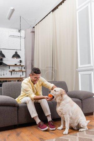 joyful man playing with labrador dog while sitting on sofa at home