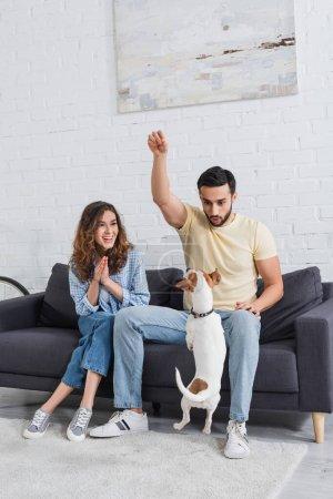 Photo pour Musulman et barbu homme tenant nourriture pour animaux de compagnie au-dessus Jack Russell Terrier près femme gaie - image libre de droit