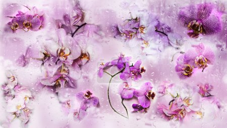 Beautiful collage background of Phalaenopsis orchid flowers and