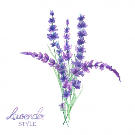 An illustration with a bouquet of the beautiful watercolor lavender branches, hand-drawn in a watercolor