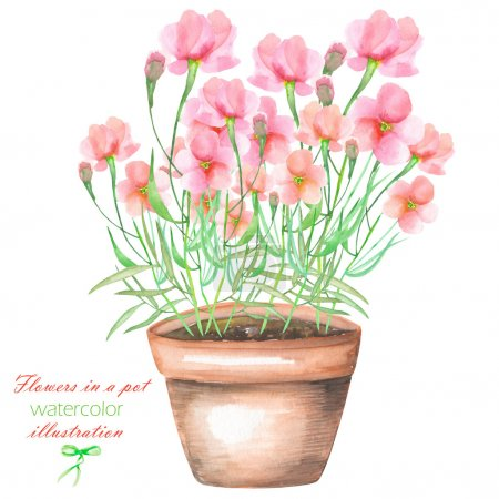 An illustration with the watercolor pink flowers in a pot