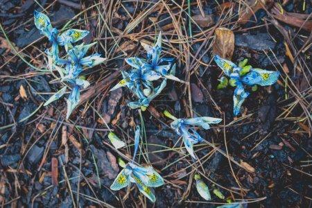 Bright flowers in mud