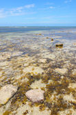 Shallow water reef South Australian coast line Yorke Peninsula