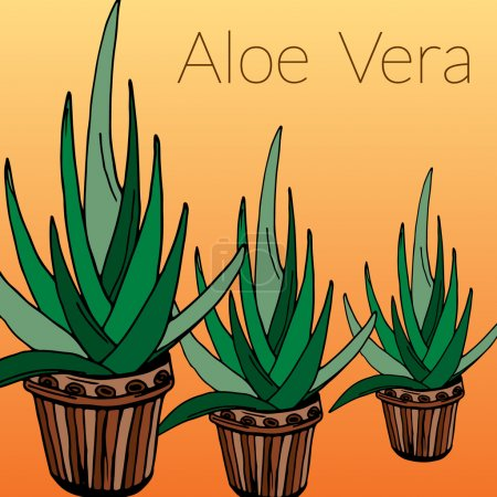 Aloe vector illustration