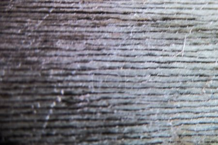 Wood texture, wood background and foundation