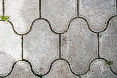 Photo pour Texture bois, fond et fondation bois, planche bois - image libre de droit
