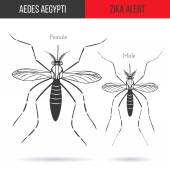 Zika alert banner poster or flyer with male and female aegypti aedes mosquitoes High quality graphic design elements isolated on white background with shadow Healthcare concept