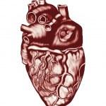 Постер, плакат: Human Heart Anatomy: chambers valves and vessels isolated over white