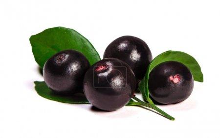 Photo for The amazon acai fruit on white background - Royalty Free Image