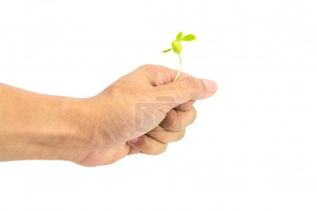 Hand holding seeding isolated on white background with clipping path