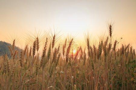 Photo pour Balles au champ et au coucher du soleil, mise au point douce - image libre de droit