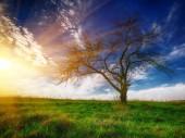 """Постер, картина, фотообои """"Одинокое дерево в поле под летнее небо."""""""