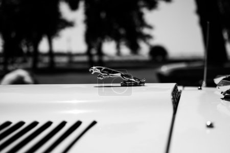 Subotica,Serbia -July 05,2015. Jaguar E-type on Annual oldtimer car show Subotica 2015. Various vintage cars and motorcycles.In organization of Oldtimer Club Subotica.