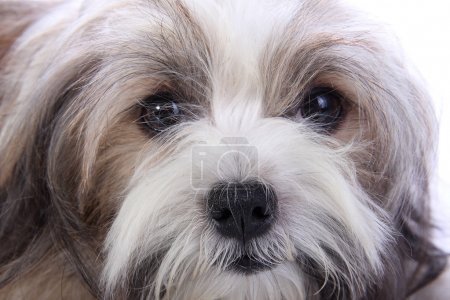 Puppy's innocent face