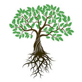 Vector Color Oak Tree with green Leafs and Roots
