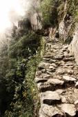 Stone road in the jungle.