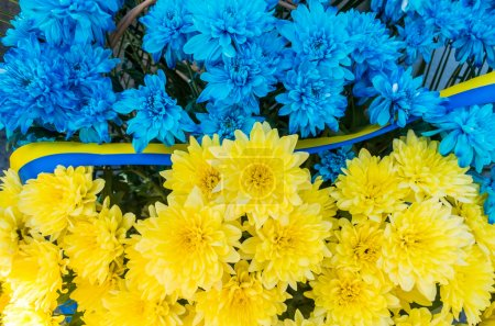 Flowers in the colors of Ukraine flag. Blue and yellow stripes