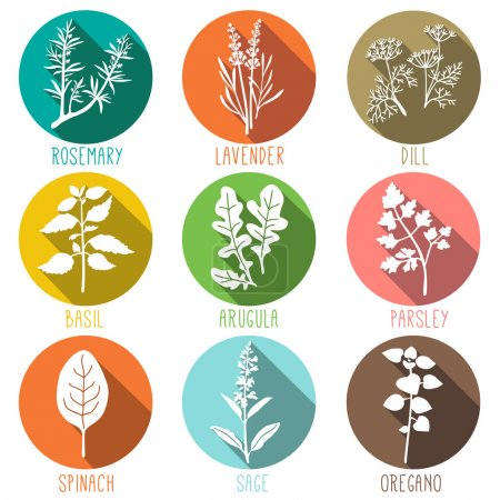 Illustration for Fresh herbs and spices icon set. Vector illustration. - Royalty Free Image