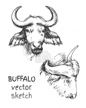 Sketch of wild buffalos