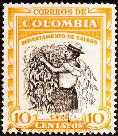 Photo pour COLOMBIE, CIRCA 1977. Cueillette de café sur timbre-poste - image libre de droit