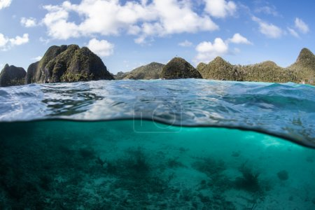 Coral colonies grow in extremely shallow water in ...