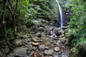 A stream tumbles downhill through a thick jungle